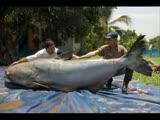 Largest fish ever caught