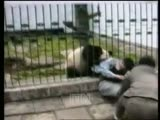 Panda attacks man