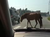 Horses uses pedestrian crossing