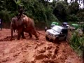 Elephant pulls a 4 wheel drive car out of the mud