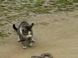 Cat vs snake battle