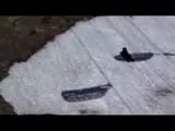 Black Bear Skiing